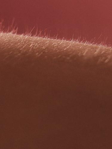 LHYL-Nav-Raised-Hairs-375x500-3